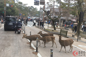 なぜ奈良ではシカは神聖な生き物? 年間100件も交通事故に遭遇! 独自の交通ルールとは