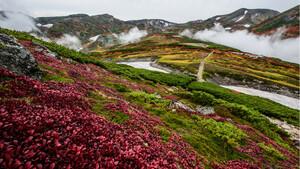 日本一早い紅葉! 大雪山黒岳は今、鮮やかな赤に染まっています
