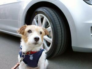犬も人も長距離ドライブ後に元気ハツラツ! 「タイヤだけでこんなに変わるのか」を実体験した