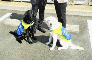 JAF、初のクラウドファンディングで介助犬の育成支援 「交通社会を支える一員」広く浸透へ