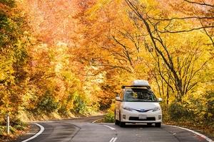 実は危ない「落ち葉」 紅葉シーズン到来で秋冬ドライブの注意すべきこと