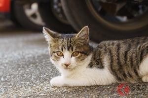 なぜ猫はエンジンルームに入り込む? 乗車前にしておきたい「猫バンバン」ってナニ?