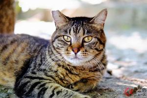 【猫の日】なぜ多い? 春の「猫の交通事故」 年間30万匹超が犠牲に