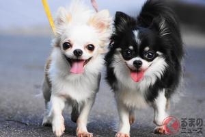 「愛犬家としてあり得ない」 自転車に乗りながら犬の散歩は道交法違反か? 自転車保険適応外の恐れも?
