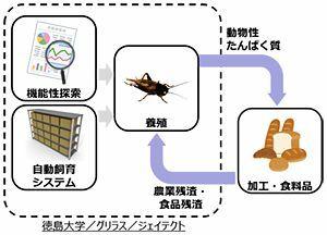 ジェイテクト、食用コオロギ事業化 徳島大ベンチャーと提携 大量生産目指す